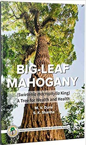 Big-Leaf Mahogany (Sweitenia macrophylla King) A T…