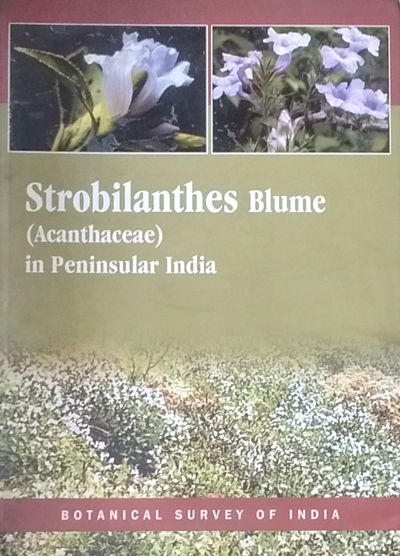 Strobilanthes Blume(Acanthaceae) in Peninsular Ind…