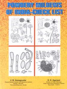 Powdery Mildews of India--Checklist