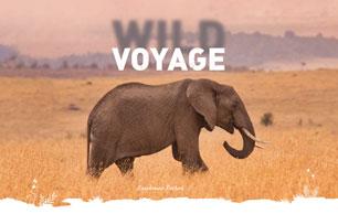 Wild Voyage
